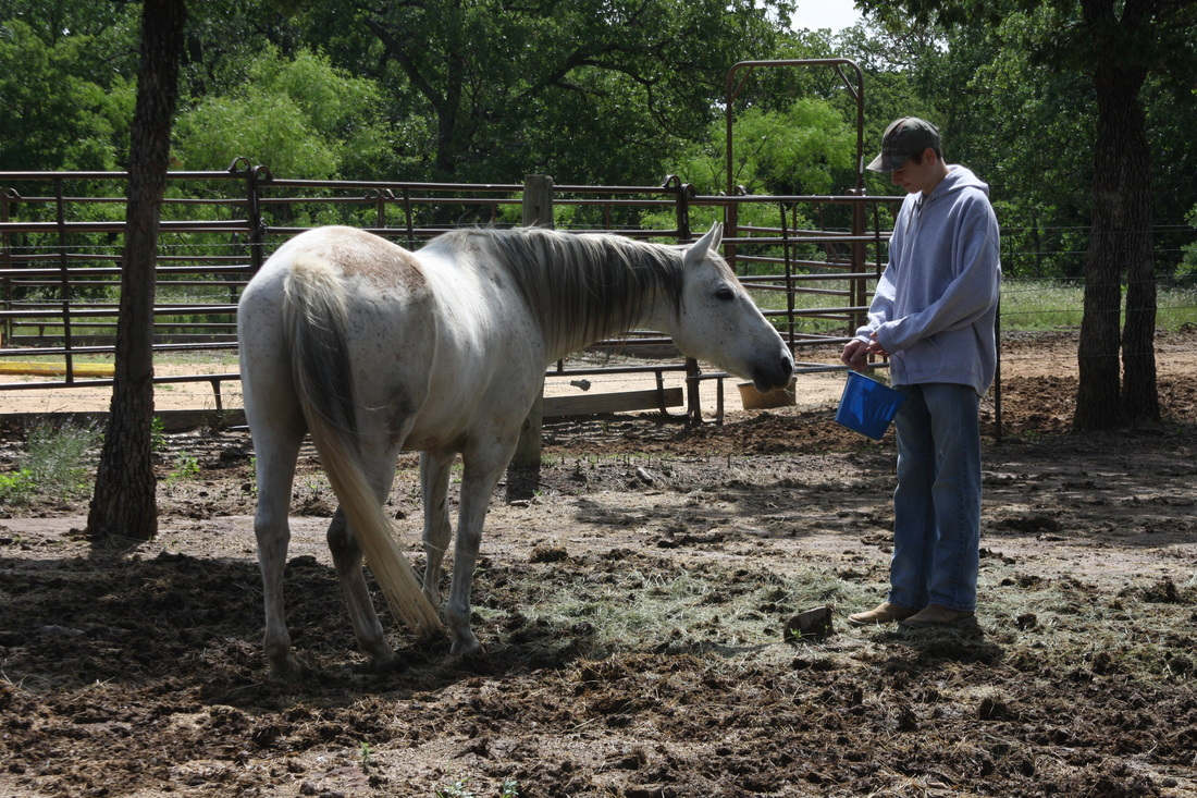 Equine assisted activities and therapies